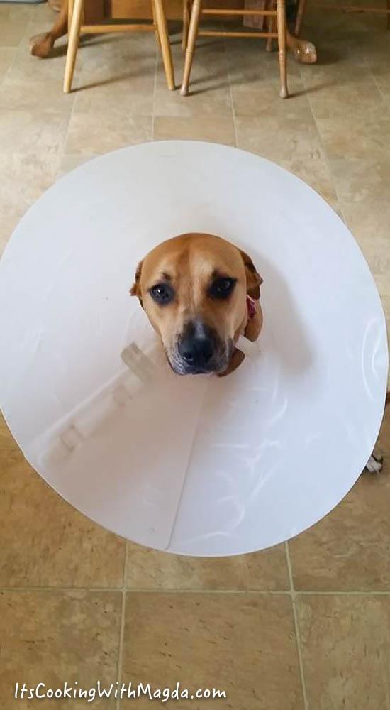 kona with her big surgery